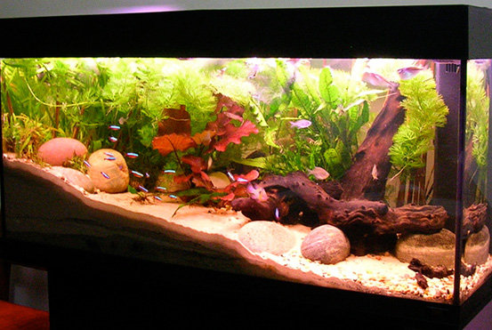 Freshwater Aquarium Equipment Checklist