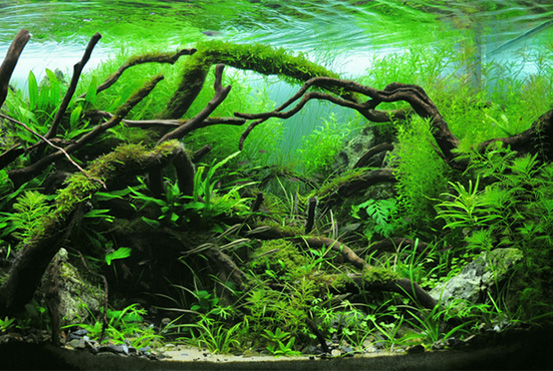 Benefits of Aquarium Plants