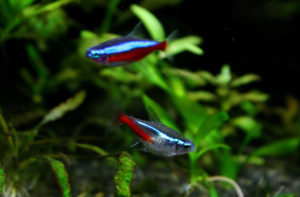 Tetra Fish Care