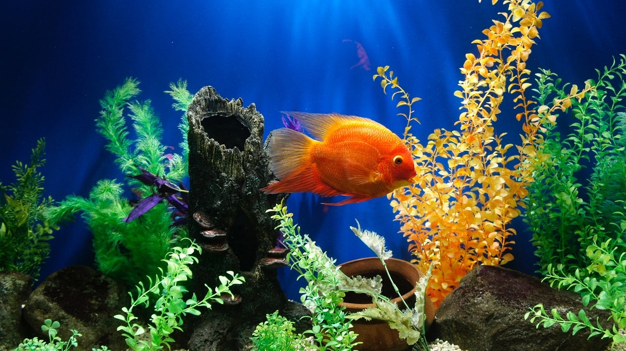 Clean And Maintain Aquarium