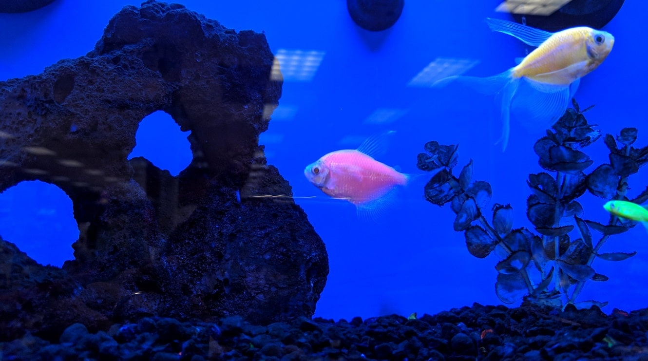 How to Set Up Tank for GloFish: Beginner's Guide