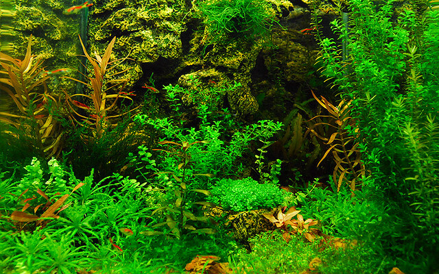 nano planted aquarium set up guide