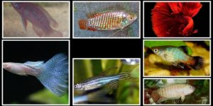 Tropical Fish Collage