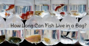 fish live in a bag