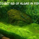 How To Get Rid Of Algae In Fish Tank Naturally?