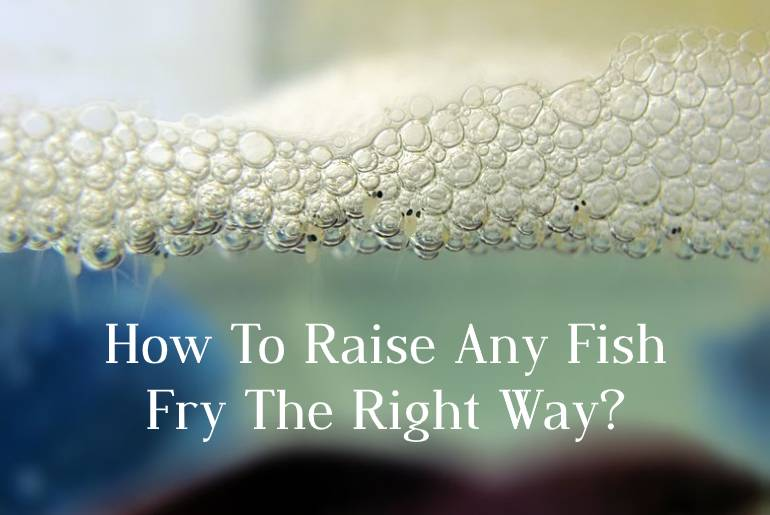 How To Raise Fish Fry The Right Way? Take Care Of Your Baby Fish