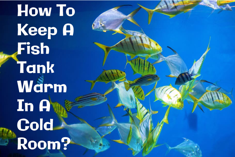 How To Keep Your Fish Tank Warm In A Cold Room? Save Your Fish!