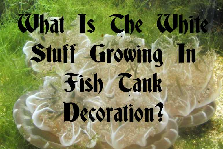 What Is The White Stuff Growing In Fish Tank Decoration?