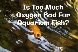 too much oxygen bad for fish