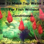 How To Make Tap Water Safe For Fish Without Conditioner?