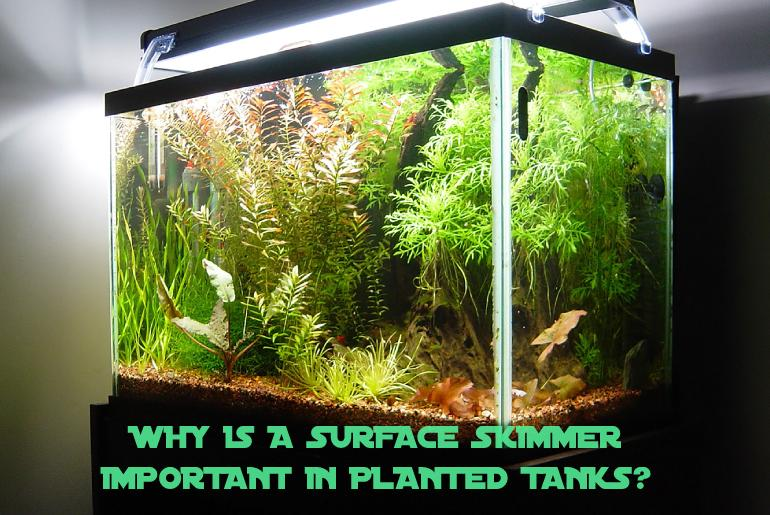 Why is a Surface Skimmer Important in Planted Tanks?