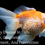 Dropsy Disease In Fish: Cause, Diagnosis, Treatment, And Prevention