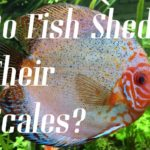 Do Fish Shed Their Scales? Beware!!!