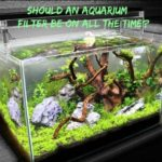 Should An Aquarium Filter Be On All The Time?