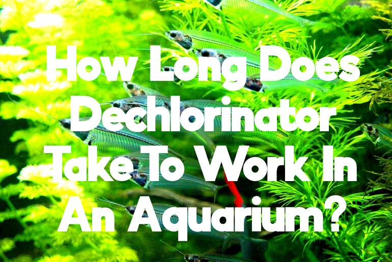 How Long Does Dechlorinator Take To Work In Tank?